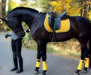 horse, black, and yellow image