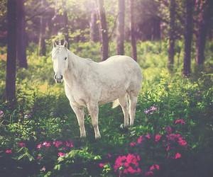flowers and unicorn image