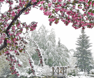 snow, winter, and flowers image