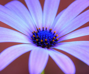 chile, flor, and flower image