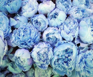 blue, flowers, and roses image