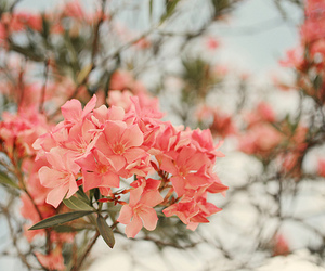 beautiful, pink, and plants image