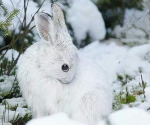 bunny, forest, and purity image