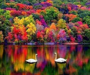 colours, Dream, and landscape image