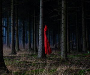 cloak, fairy tale, and forest image
