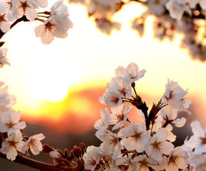 flowers, light, and nature image