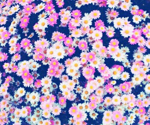 flowers, pink, and background image