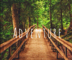 adventure, nature, and forest image