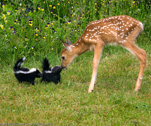 animal, bambi, and skunk image