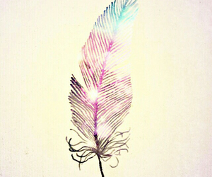 feather and wallpaper image