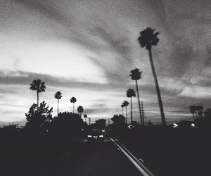 black and white, grunge, and palm trees image