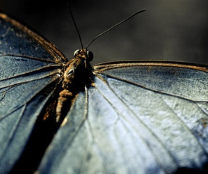 amazing, moth, and wings image