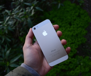 apple, gold, and plants image