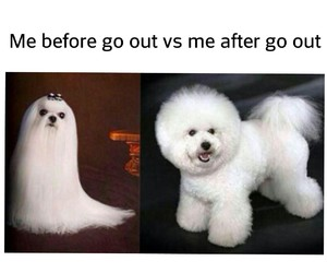 after, before, and dog image