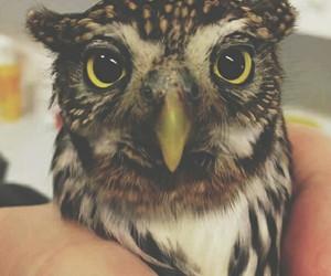 animal, eyes, and nature image