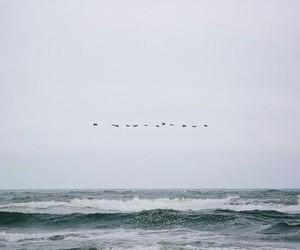 birds and ocean image