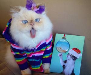 cats, OMG, and so image