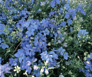 flowers, nature, and blue image