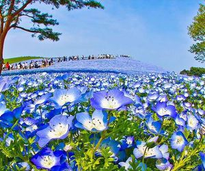 blue, blue flowers, and japan image