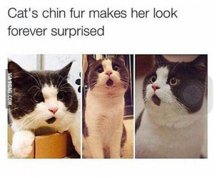 cat, forever, and surprised image
