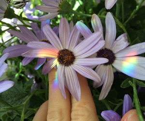 flowers, rainbow, and nature image