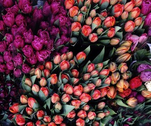 blooms, flowers, and gorgeous image