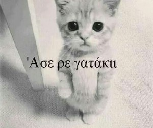 greek, greek quotes, and cat image