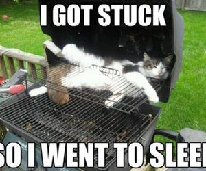 cat, sleep, and stuck image