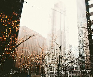 beautiful, trees, and city image