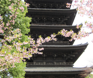 japan, cherry blossom, and kyoto image