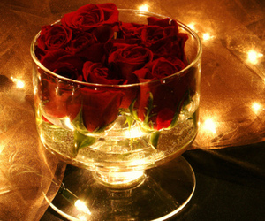 rose, light, and photography image