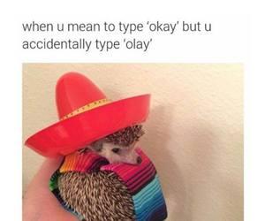 funny, okay, and olay image