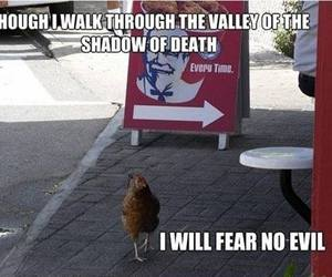 funny, Chicken, and KFC image