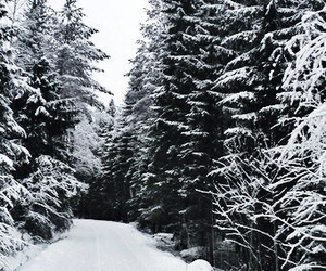finland and forest image
