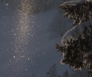 christmas tree, snow, and magic image