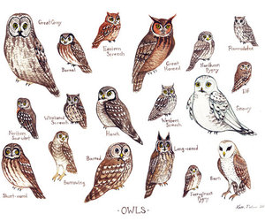 owl, drawing, and illustration image