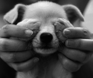 animal, black and white, and dog image