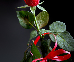 beautiful, photography, and flower image