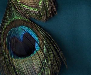 blue, color, and feathers image