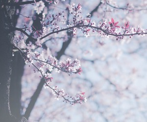 bokeh, flower, and tree image