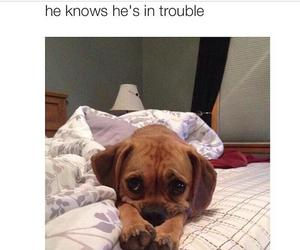 dog, cute, and trouble image