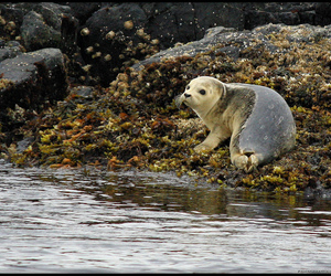 pacific ocean, seal, and wildlife image