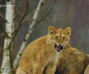 Image by Cheetah McCat