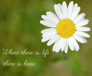 flower, happiness, and inspiration image