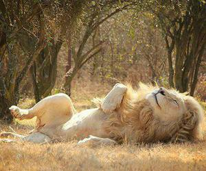 animals, beautiful, and lion image
