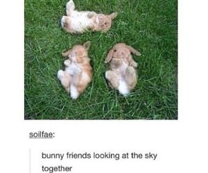 bunny, cute, and funny image