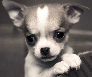 dog, cute animals, and puppy image