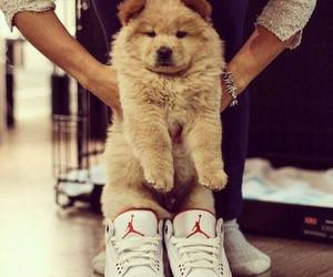 dog, shoes, and jordan image