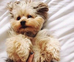 aww, love, and dog image