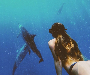 dolphin, nature, and summer image